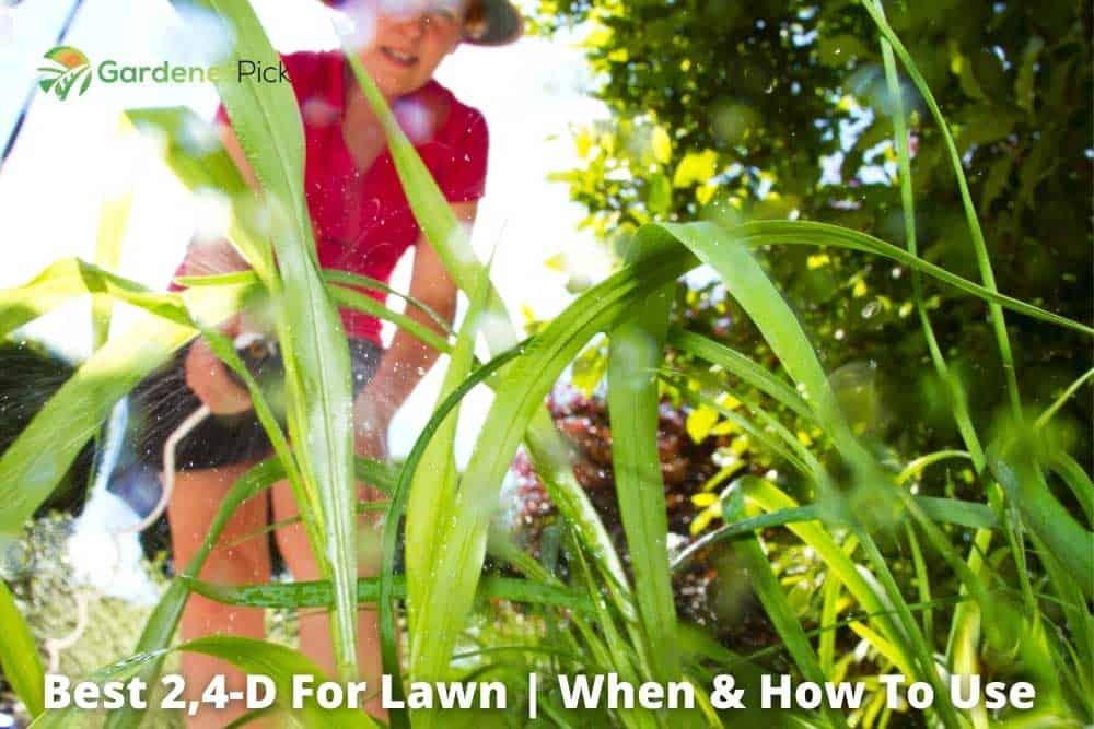 2,4-d-lawn