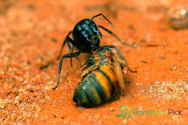 get rid of ants in the garden naturally