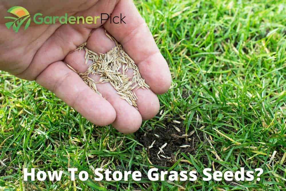 how to store grass seeds